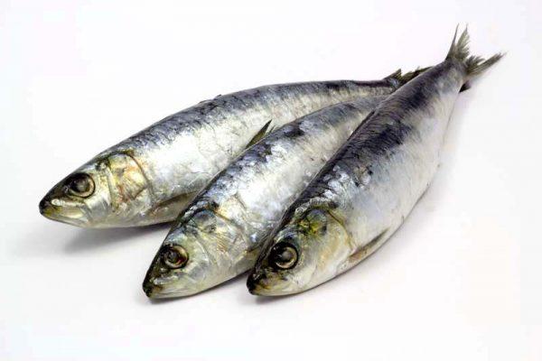 3 sardinhas