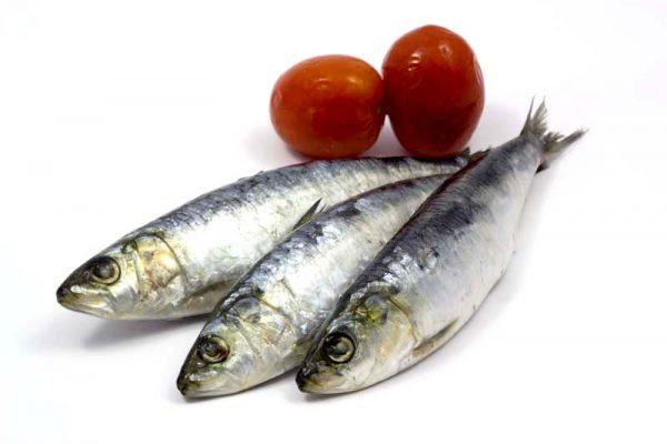 3 sardinhas macho